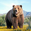 24-Medved