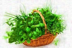 Zelen v korzinke