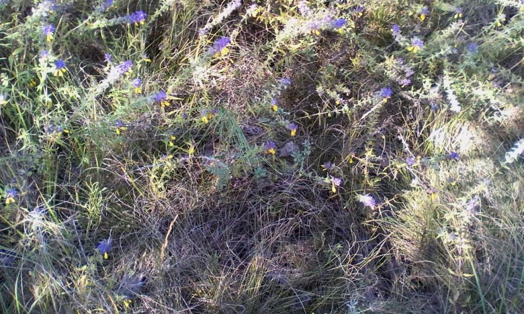 Zvety na beregu reki Snov 1