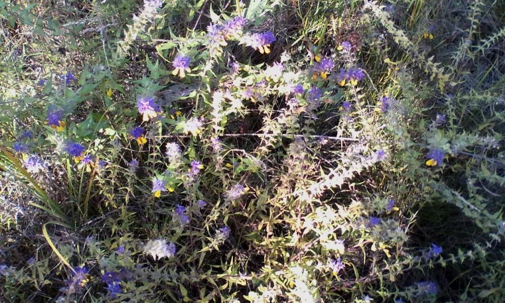 Zvety na beregu reki Snov 2