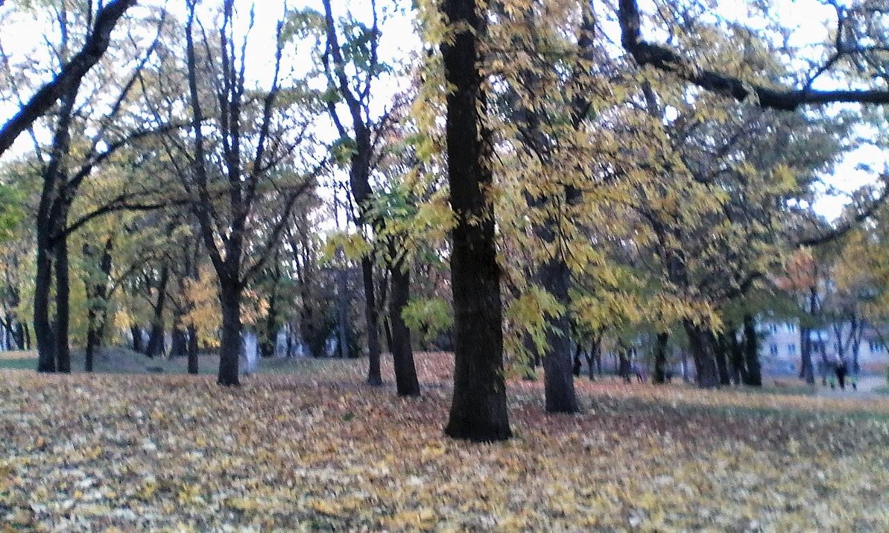 Derev'ya-Val-Chernigov-20181019