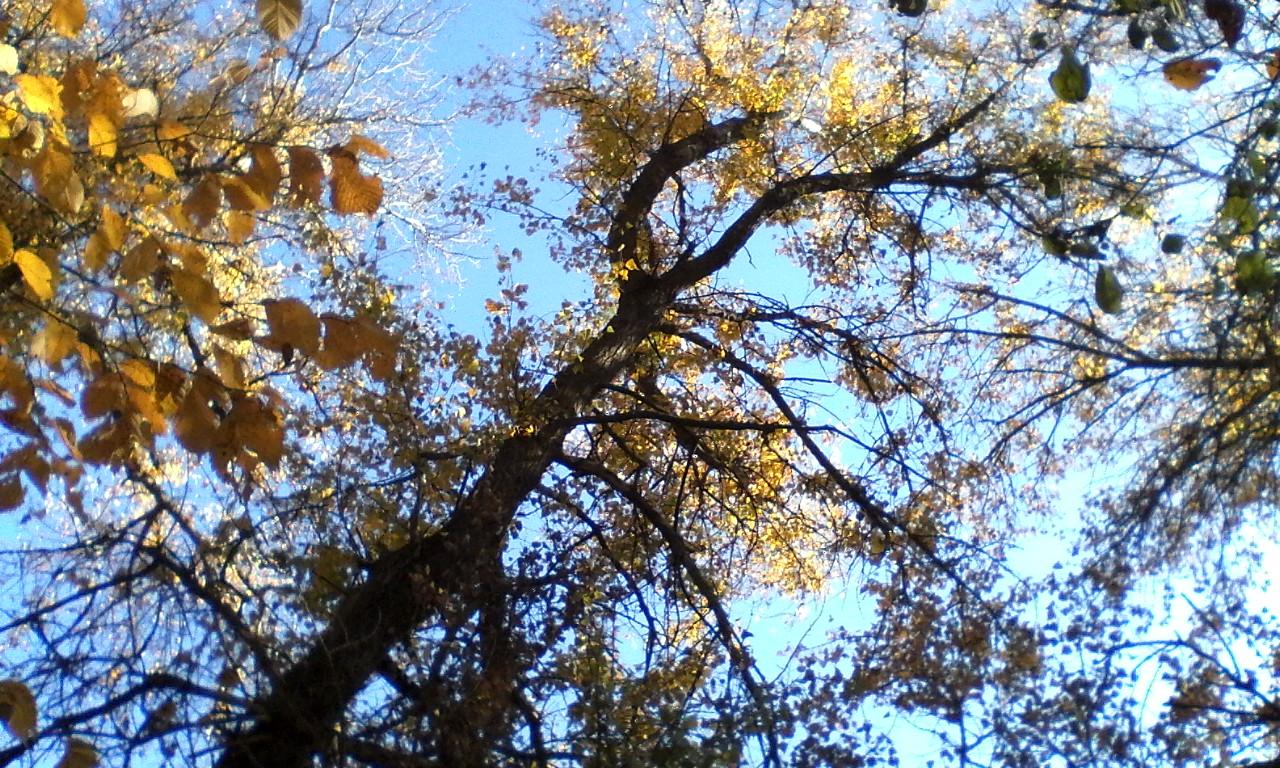 Лесные деревья_20181021