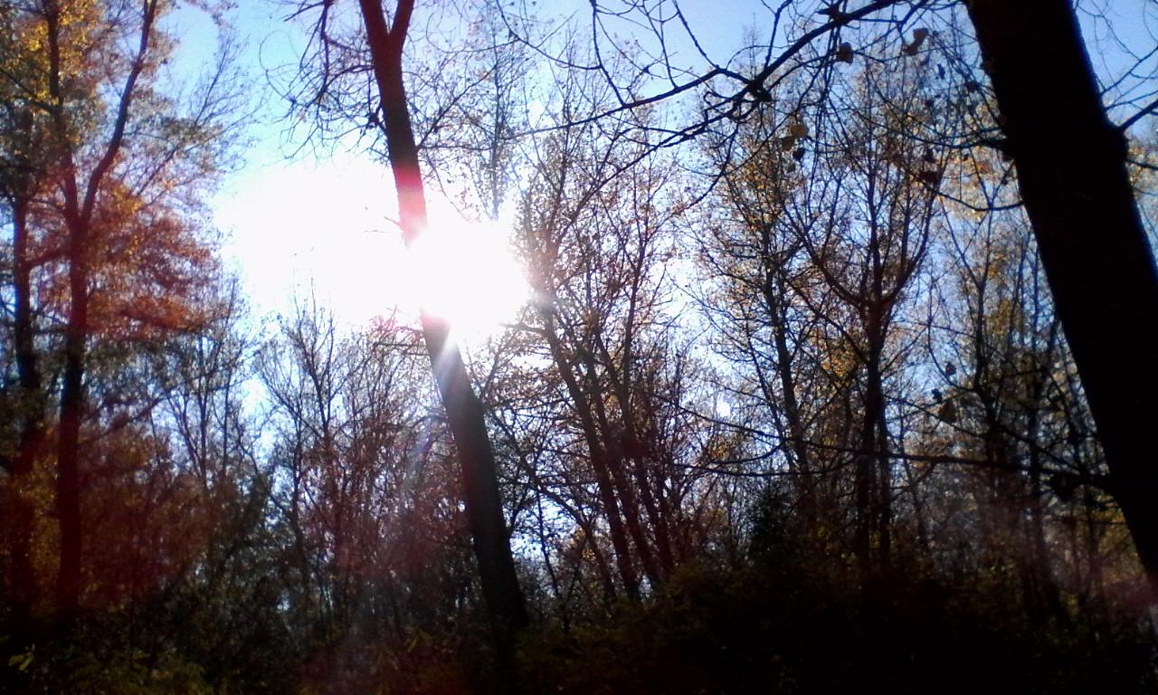 Солнце сквозь ветви деревьев_20181021