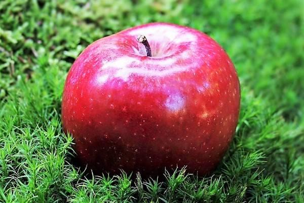 Яблоко на траве